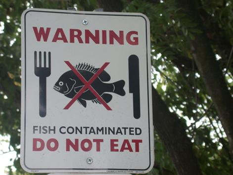 Toxics in the columbia river threaten health the lower for Fish not eating