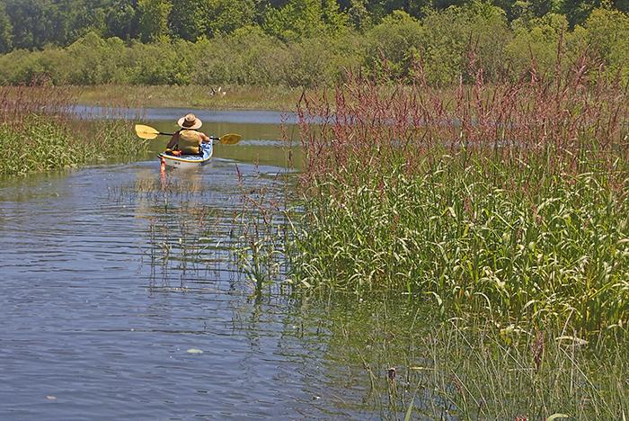 kayaker paddles through the grasses of Brown Slough