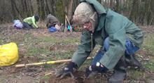 Volunteer plants a tree at Sandy River Delta